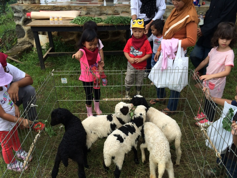 Happy banget ngasih makan kambing :)